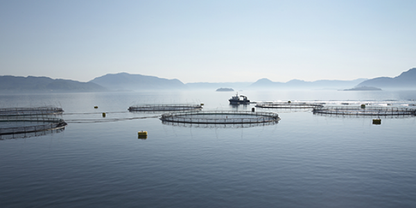 Offshore Aquaculture